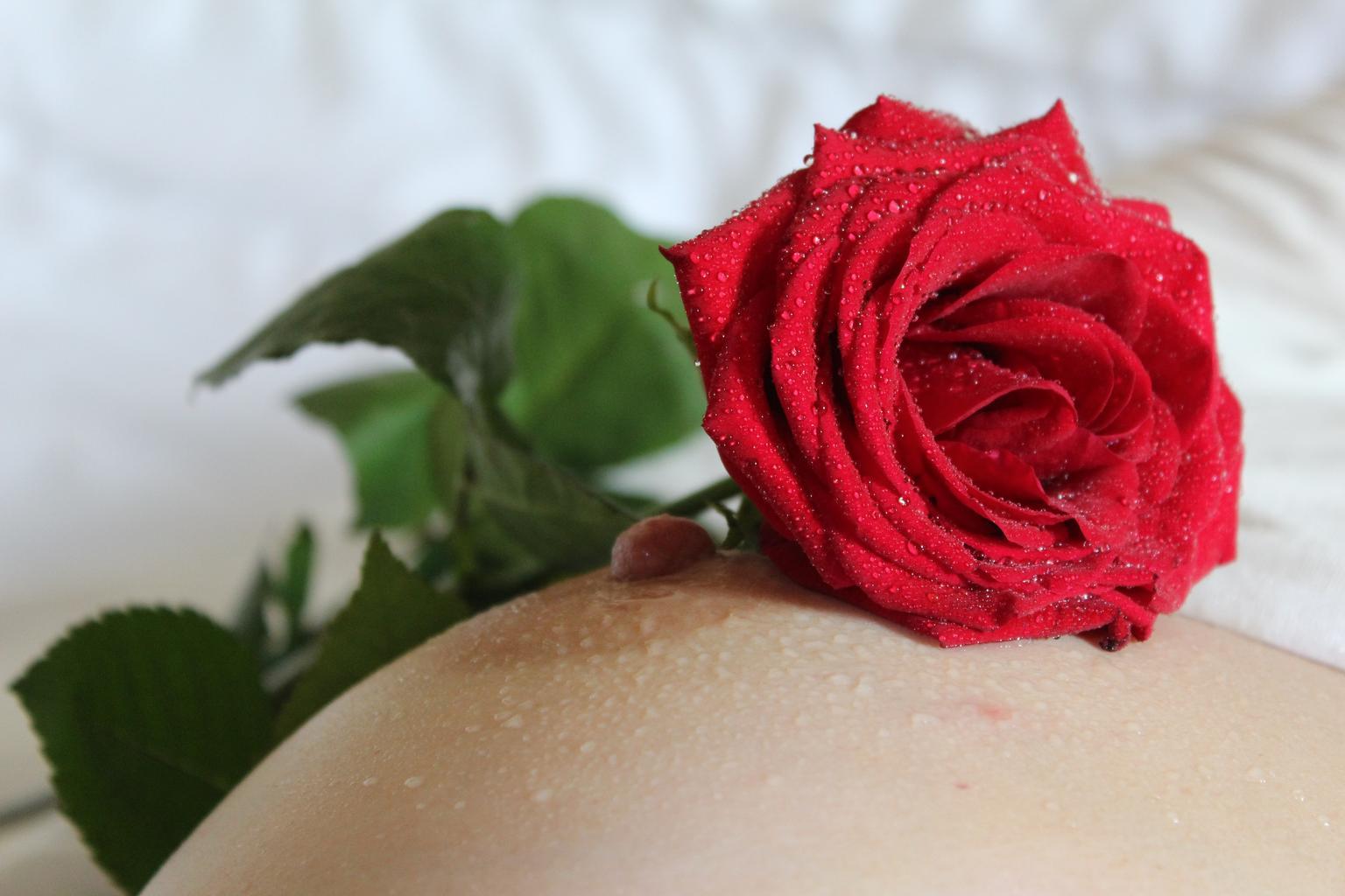 erotika, ruža, prsia
